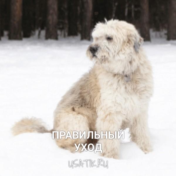 Уход за южнорусскими овчарками